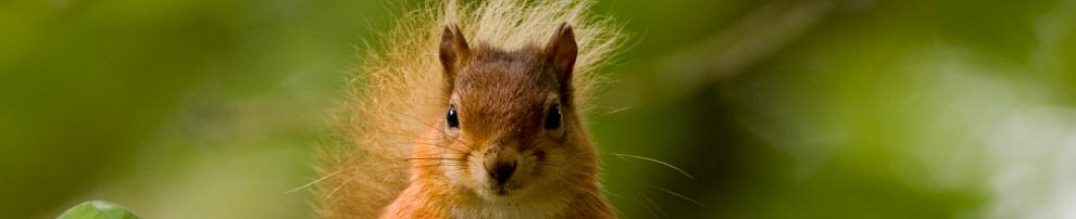 squirrel-Header-1